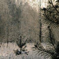 Про январь :: Сергей Иванов