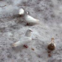 Белые :: Наталья Джикидзе (Берёзина)