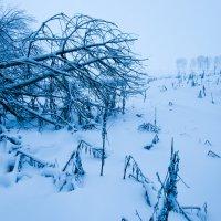 Зима :: Илья Любименко