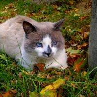 осенний Бася с голубыми глазами :: Александр Прокудин