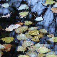 Осень, осень, ну давай у листьев спросим... :: Алексей Афанасьев