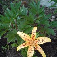 август, цветы :: Nadezhda