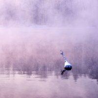 Фиолетовый рассвет :: Михаил Бабаков