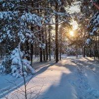Подмосковный лес 2 :: Андрей Дворников