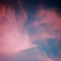 Птицы в небе :: Александр Коликов