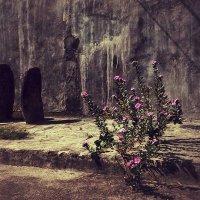 микрооазис в каменном мире :: Александр