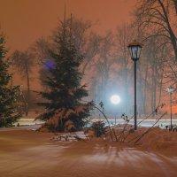 Луч света в зимнем парке :: Сергей Корнев
