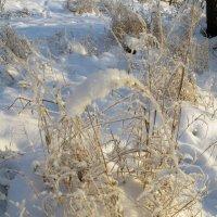 Трава на снегу :: Вера Щукина