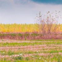 Радужная Осень :: Елена Бразис