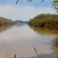 река Алей :: Алла Лямкина