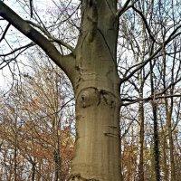 Я за вами наблюдаю! Не сорите в лесу! :: Nina Yudicheva