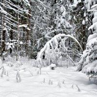 Зимний сон :: Татьяна Петранова