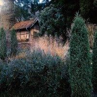домик в лесу :: Леночка .