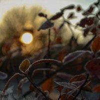 Осеннее утро :: Olga Savelova