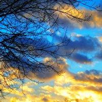 Зимние закаты. :: Лара ***