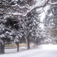 Снежный январь :: Елена Семигина