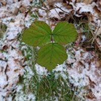 Зеленые листья :: Nina Yudicheva