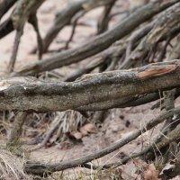 Дерево, которое идёт к воде :: Мария