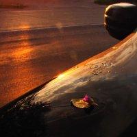 Про цветок и листок. :: Ирина Нафаня
