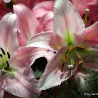 много цветов не бывает :: Олег Лукьянов