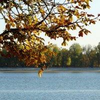 Солнечный октябрь... :: Тамара (st.tamara)