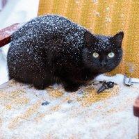 Кошка :: Max Flynt