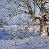 Хранитель снежного раздолья.... :: Лесо-Вед (Баранов)