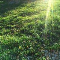 Лучи на траве :: Наталья