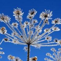 зимние цветы :: Елена