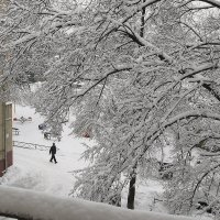 снегом укрыло :: Владимир