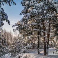 Подмосковная зима :: Андрей Дворников