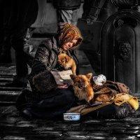 Верите в бога! Помогите собакам! :: Евгений Мокин