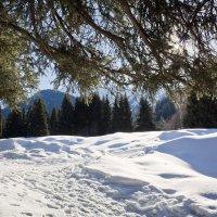 Зимняя свежесть :: Алексей Большаков
