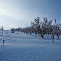 Экскурсия в Гадюкино зимой (12) :: Александр Резуненко