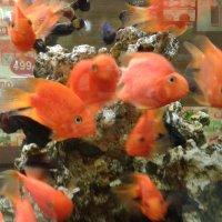 Рыбки :: Мила