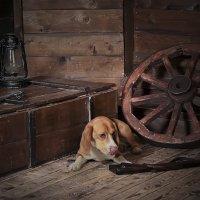 Про пса и ружье :: Тата Казакова
