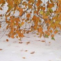 Березовый занавес зимой :: Лидия (naum.lidiya)