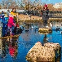 Дети кормят голубей :: Андрей Поляков