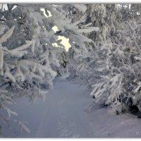 White Gallery :: Василий Хорошев