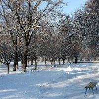 В зимнем парке. :: Валентина ツ ღ✿ღ