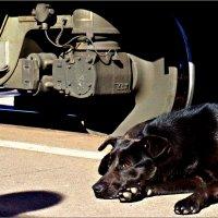 Железнодорожный пёс :: Кай-8 (Ярослав) Забелин