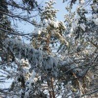 Хороша ты, зимушка-зима! :: nika555nika Ирина