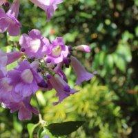 Цветы :: Larissa Sergeeva