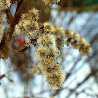 зимний цветок :: Александр Прокудин