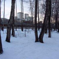 Первый день февраля в Измайловском парке :: Андрей Лукьянов