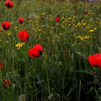 В летних травах... :: евгения