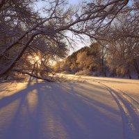 Пляшут искорки света в лучах бархатистого снега... :: Елена Ярова