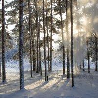 Чудесный морозный день :: leo yagonen