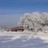 Мороз и дрова :: Наталия Григорьева