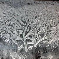 Зимние узоры :: Валерий Толмачев